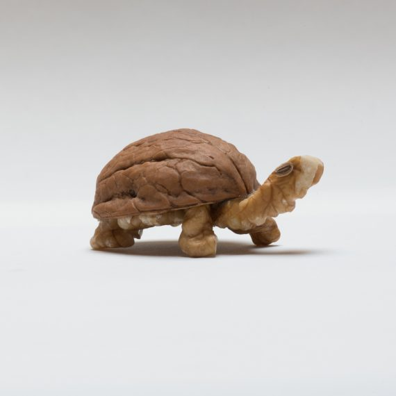 photo of turtle made out of a walnut by Kelly Crull