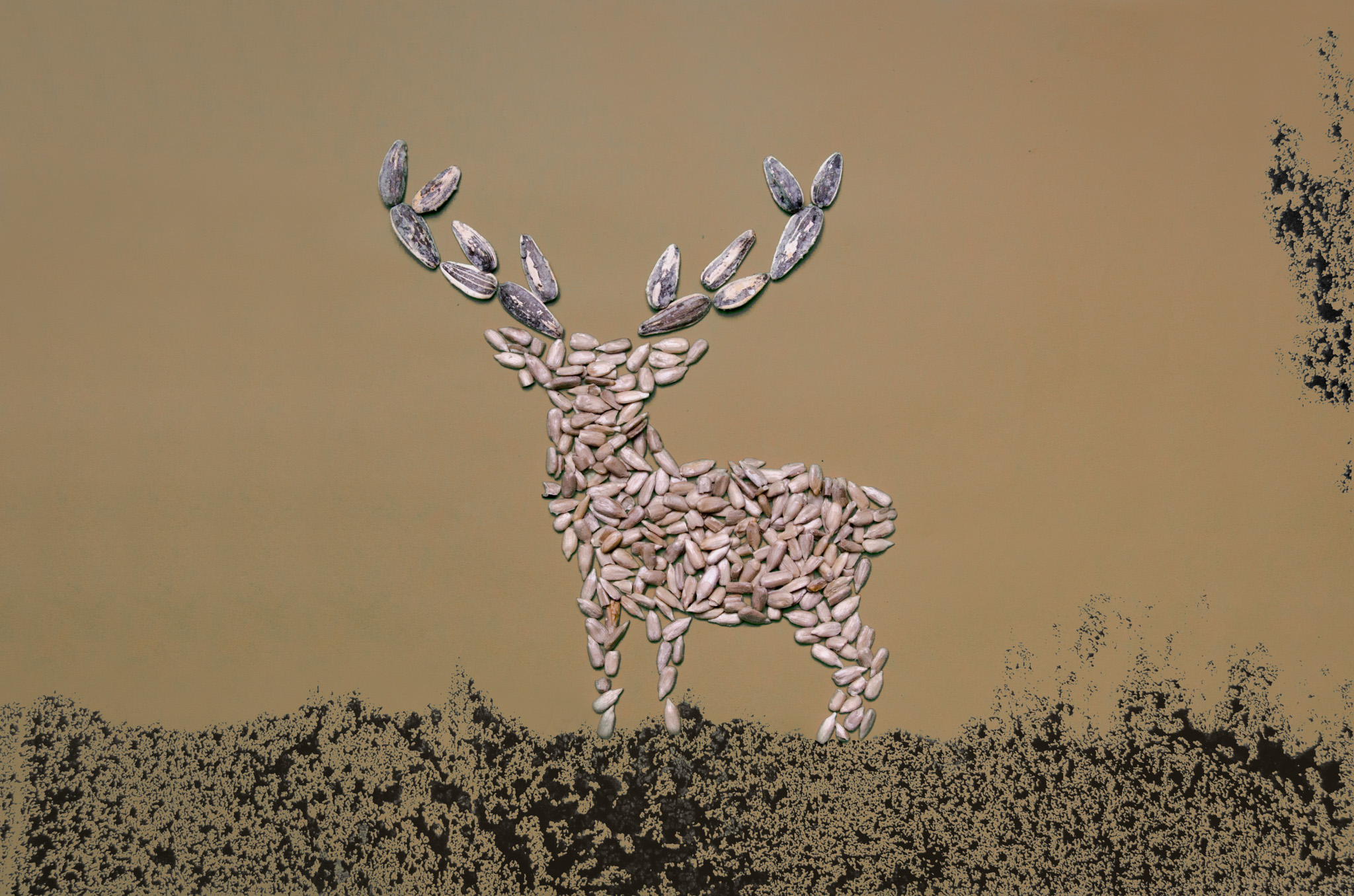 photo of a stag made out of sunflower seeds by Kelly Crull