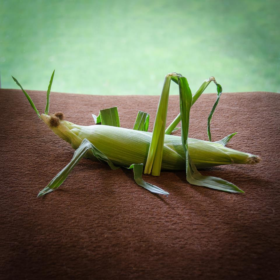 photo of grasshopper made out of Iowa sweet corn by Kelly Crull