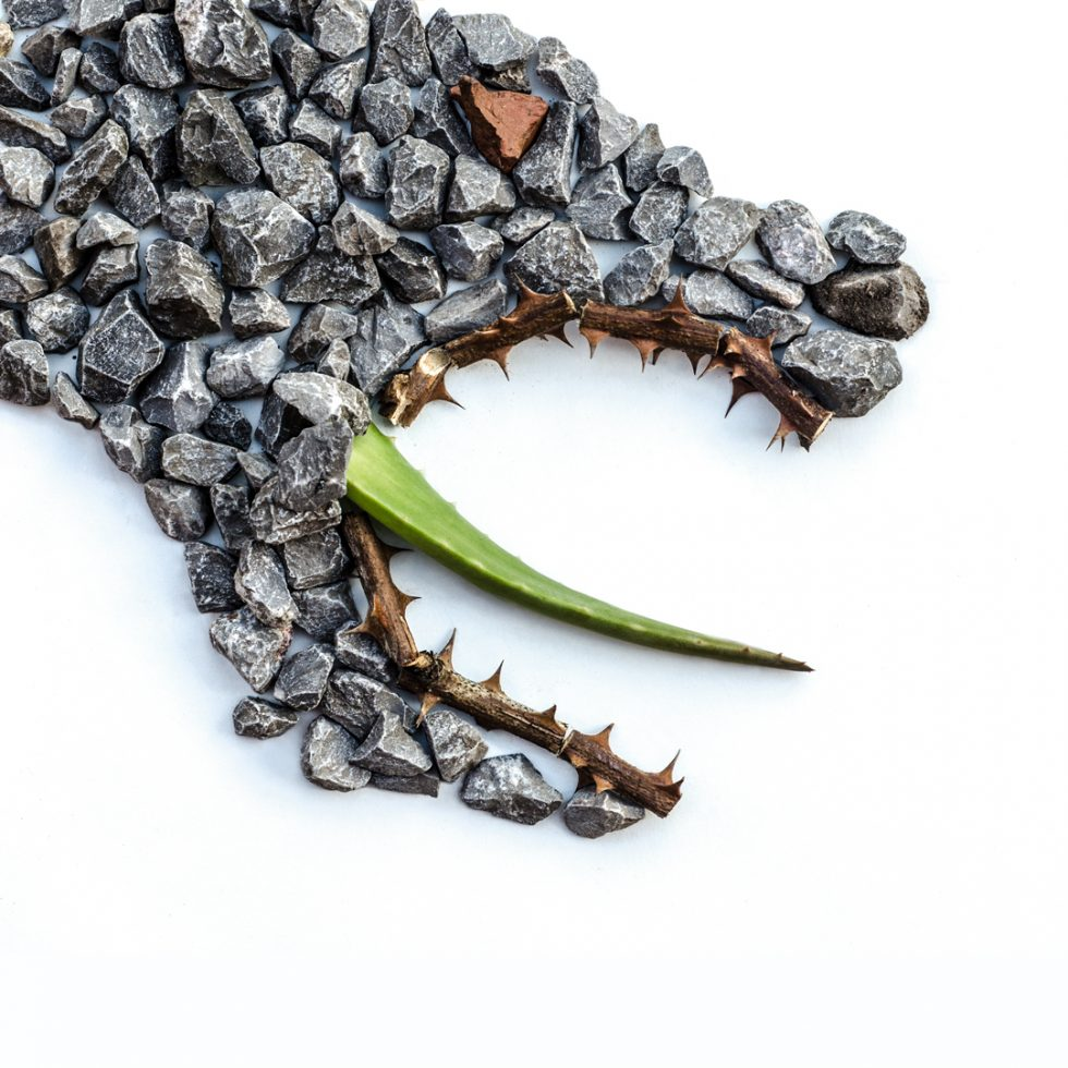 photo of big bad wolf made out of rocks, thorns, and an aloe plant by Kelly Crull