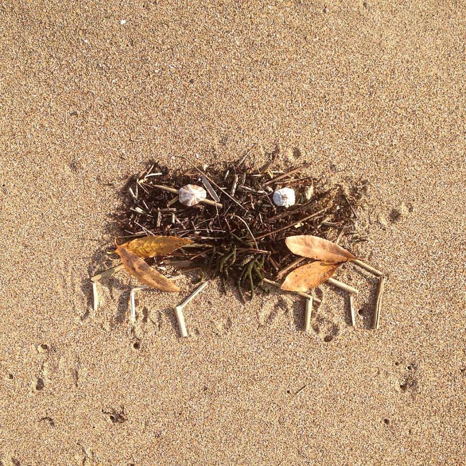 photo of a crab made out of leaves, sticks, shells and seaweed found on the beach by Kelly Crull