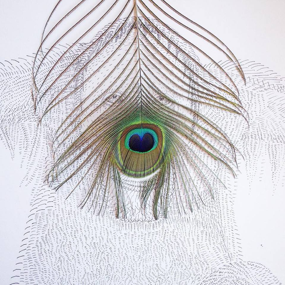 photo of an orangutan made with a peacock feather and an ink pen by Kelly Crull