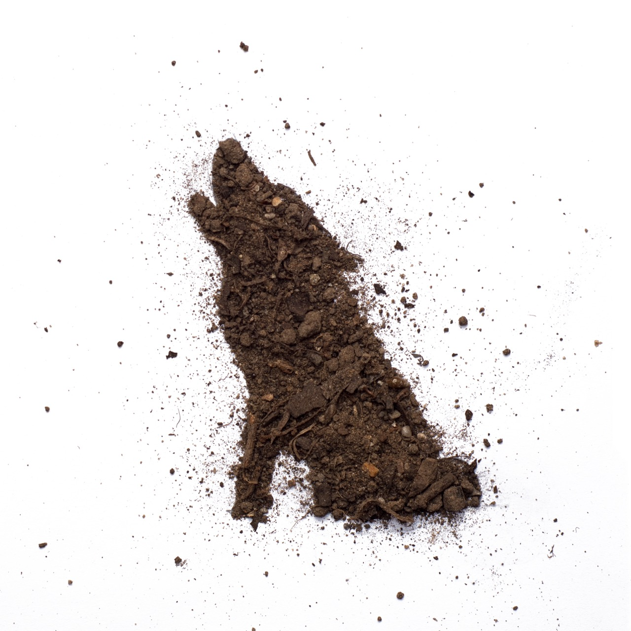 photo of big bad wolf made out of dirt by Kelly Crull